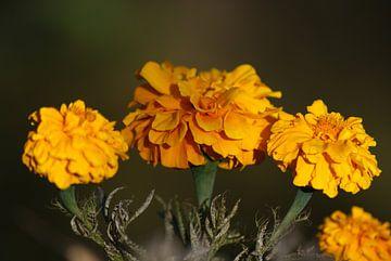 Gele bloem  von Eva Toes
