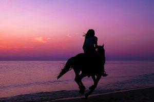 Paard met ruiter tijdens ondergaande zon van