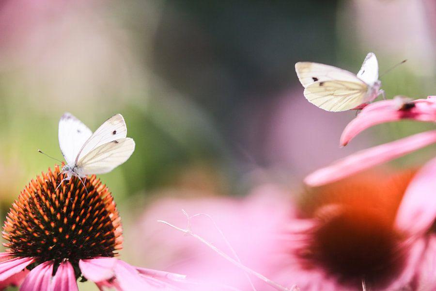 White butterflies van Mark Zanderink