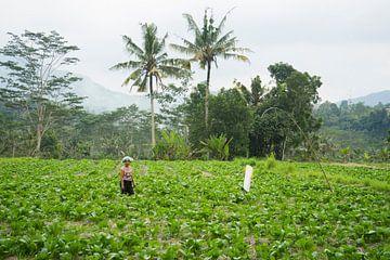 Balinese vrouw in Sidemen van Martijn Stoppels