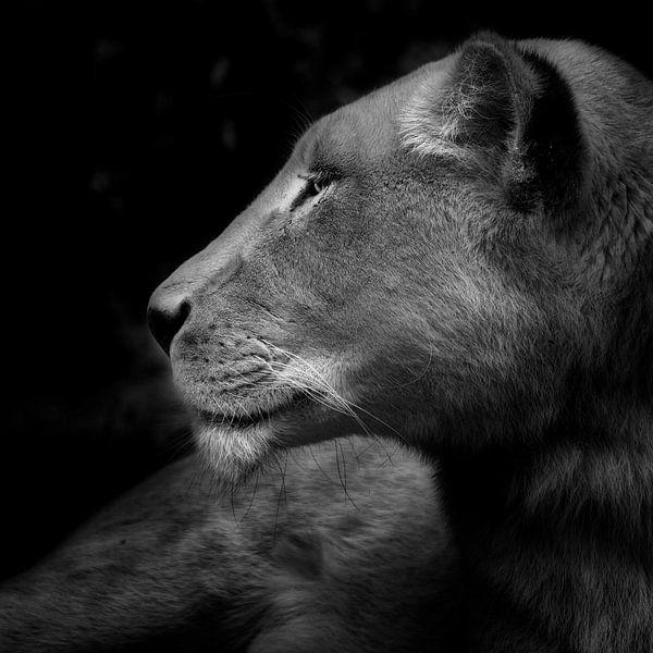 Her majesty, portret van een leeuwin van Ruud Peters