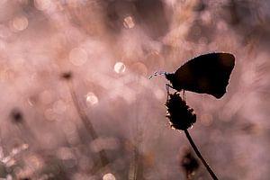 Schmetterling im Gegenlicht von Mark Dankers