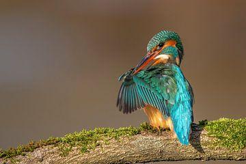Flügel überprüfen... von Wim Hufkens