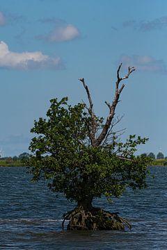 Baum im Wasser von Merijn Loch