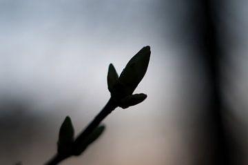 Die Silhouette des Frühlings von Anita van Hengel
