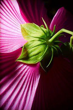 Achterkant Paarse Hibiscus  van Jan Brons