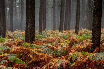 Herfst in het bos in de buurt van Gemmenich en Sippenaeken van Henk Hulshof