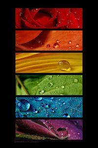 Macro - Regenboog van