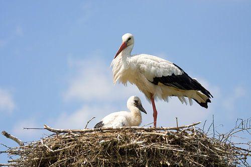 Ooievaar met jong op nest van Sandra de Heij