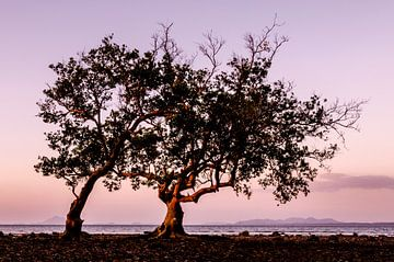 Mangrove Tree van Stephan Smit
