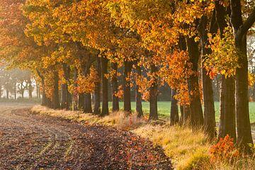 Herfst Laantje von Joep de Groot