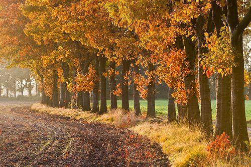 Herfst Laantje van