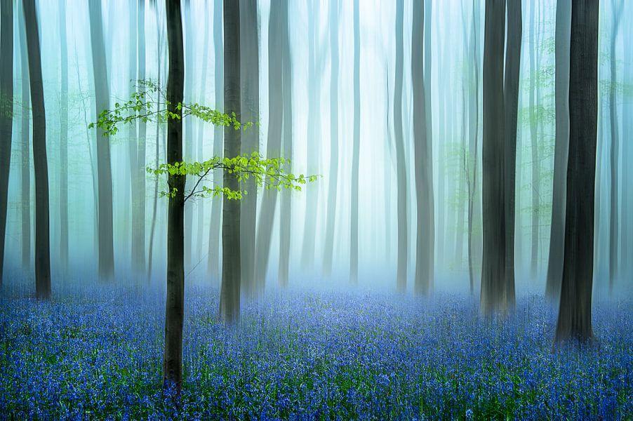 het blauwe bos.......