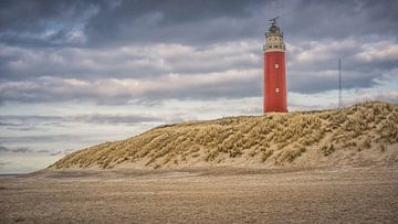 Texel (1) van Patrick Vischschraper