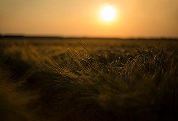 Graanveld tijdens zonsondergang (Groningen - Nederland) van Marcel Kerdijk