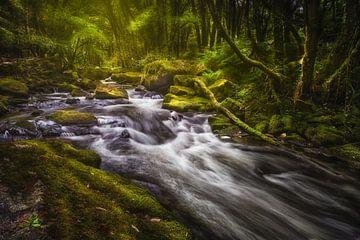 Golitha Falls van Sander Poppe