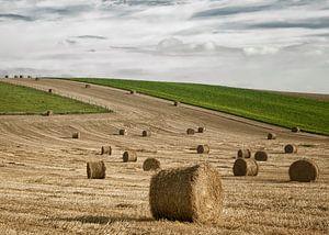 Oogsten in Picardie