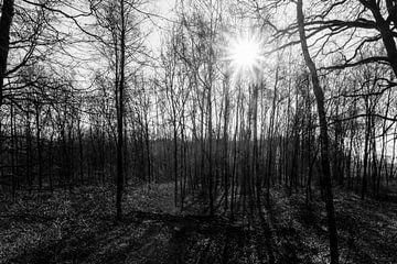 Statige bomen met de zon als tegenlicht van Lieke van Grinsven van Aarle
