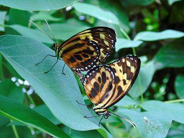 Tropische vlinder Tropical Butterfly (Collectie 2018) von Jan van Bruggen