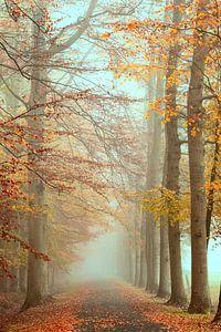 Brouillard dans la forêt d'automne sur Francis Dost