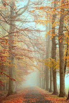 Mist in herfstbos van Francis Dost