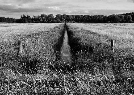 Graben und Wiese in Schwarz-Weiß