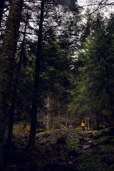Groen ontmoet geel in de Vogezen van Jeanine Verbraak