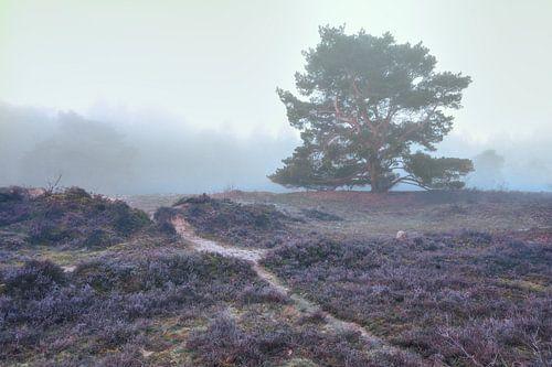 Zeegser Duinen in de mist met groene den en pad