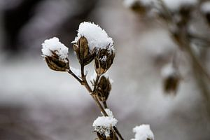 Topjes van sneeuw