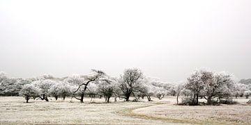 Winterwonderland von Bob Bleeker