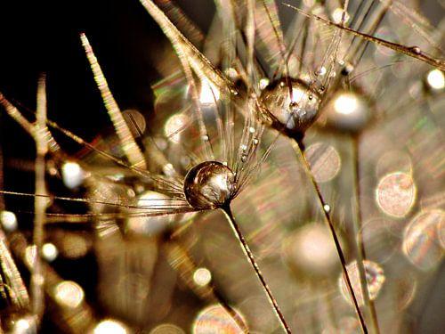 Pusteblume Golden Touch von Julia Delgado