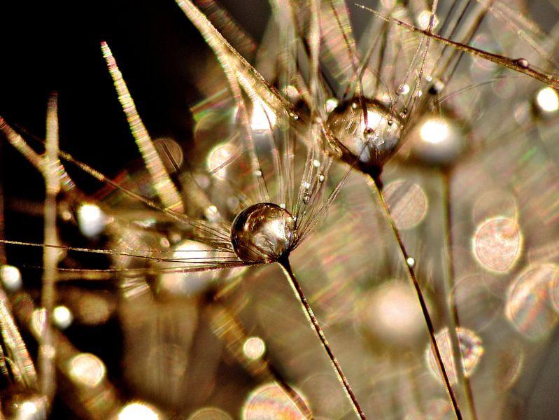 Pusteblume Golden Touch van Julia Delgado