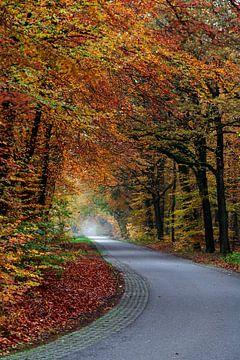 Op weg naar het licht _ Herfstbos Gasselte van R Smallenbroek