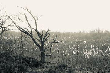 Mysterieus landschap, boom von Wendy Tellier - Vastenhouw