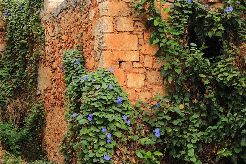 Groen begroeide oude muur van Bobsphotography