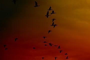 Vlucht ganzen van Jos Verhoeven