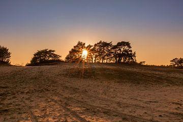 Goldene Stunde am Sandtrieb von Rick van de Kraats