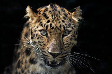 Im Auge des Leoparden von Joachim G. Pinkawa