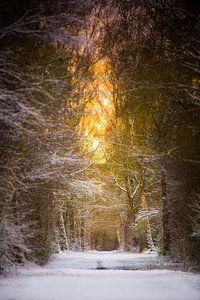 Besneeuwde laan in winters ochtendlicht van Robert Ruidl