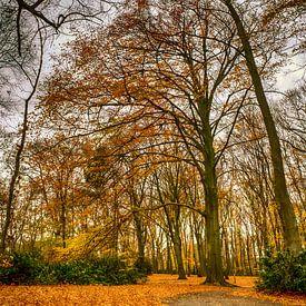 Herfst van Rene Wolf