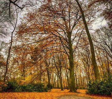 Autumn colors von Rene Wolf
