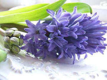 hyacint op schaal 2 van Nicolet Reus