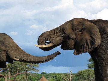 Vrolijke Olifanten van Arno Snellenberg