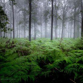 Mystik des Waldes von Robbert Wille