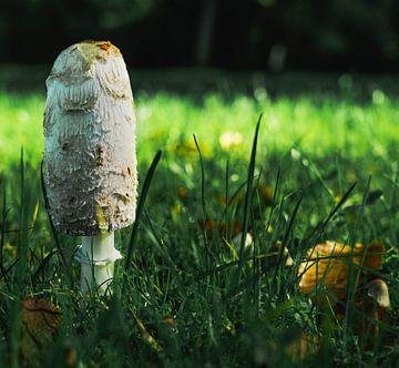 paddenstoel voor het bos van