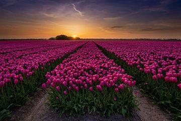 Tulpen bollenveld in Noord Holland van Arjan Battjes