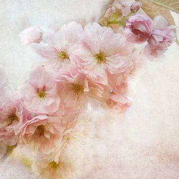 Sakura van Claudia Moeckel