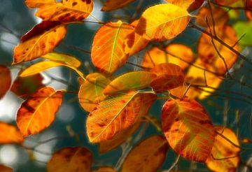Unbedingt... (Herbstblätter in warmen Tönen) von Caroline Lichthart