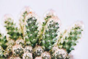 Cactus van Uwe Merkel