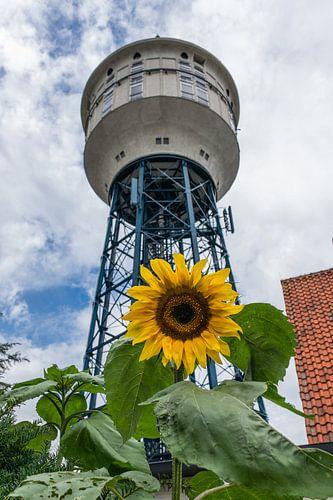 Zonnebloem voor de watertoren in Goes van Patrick Verhoef